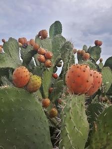 Cactus Kweekset